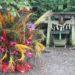 中島みゆきの樹木をテーマにした歌4「命の別名」